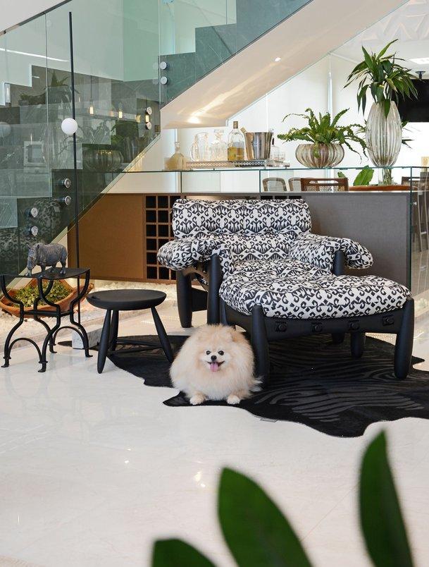 BEIGE VERSAILLES 60 X 120, cachorro, dog