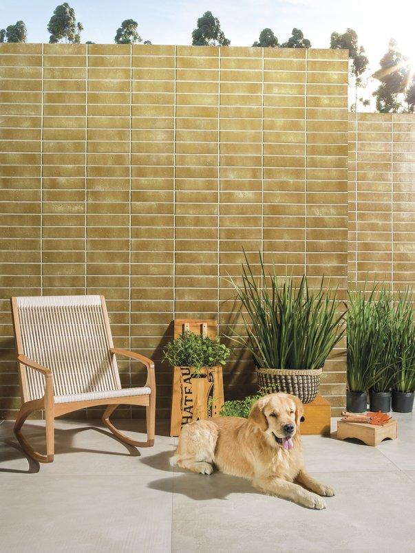 Casa com plantas e cachorro.