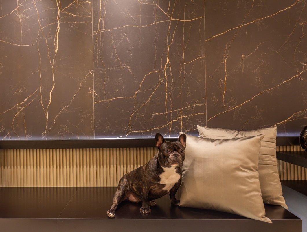 Painel - cachorro dog