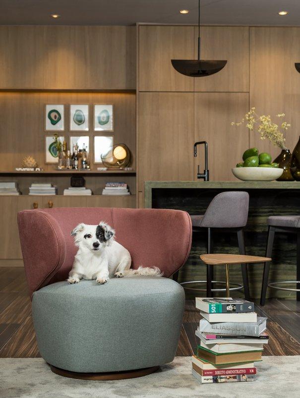 Foto: Mariana Boro; cachorro, dog.